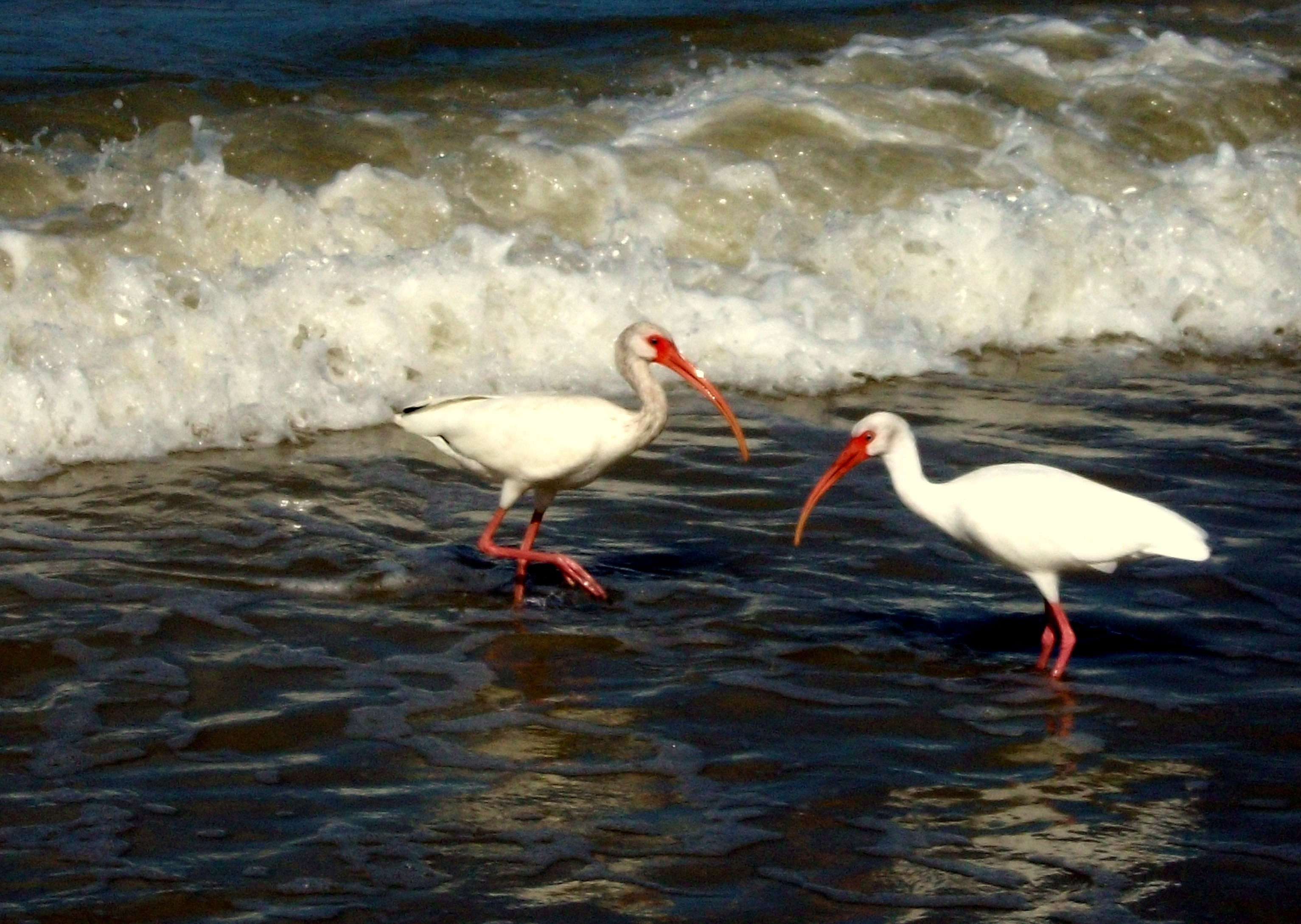 Beach Birds Of Naples Florida
